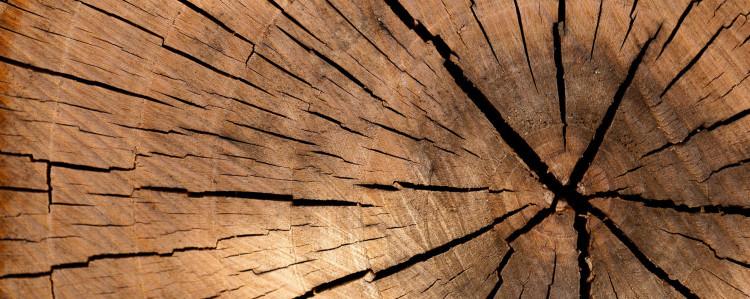 Brennholz Feuchtigkeit Die Gefahr Beim Heizen Im Kaminofen