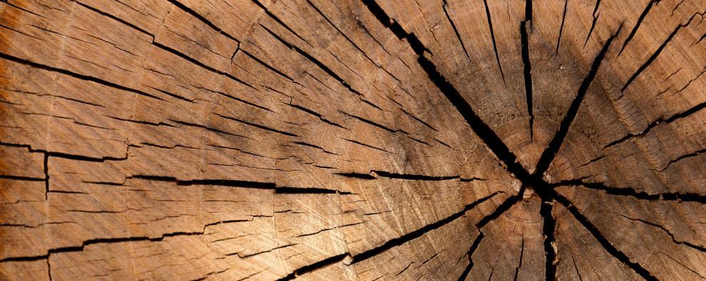 aufgesägter Holzstamm in der Seitenansicht