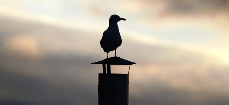 Nistende-Vögel-auf-dem-Schornstein