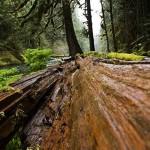 Brennholz Schimmel: Was Sie wissen müssen und dagegen tun können