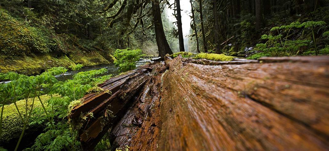 Brennholz-Schimmel-erkennen