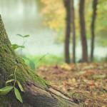 Holzschädlinge: Das müssen Sie wissen
