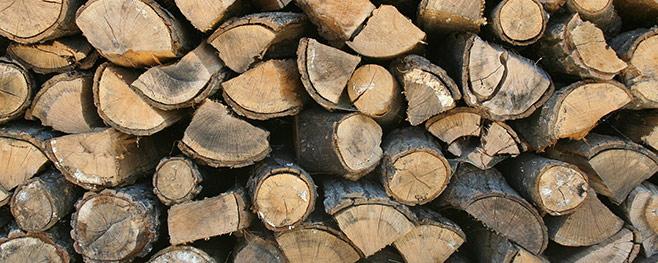 Holz-Schädlinge-bekämpfen
