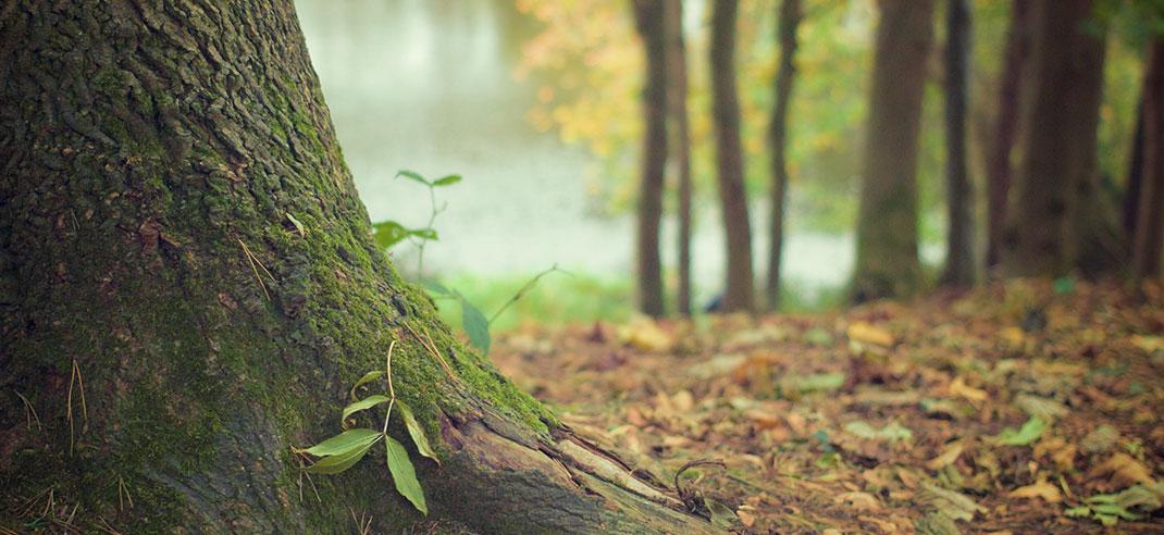 Holz-Schädlinge