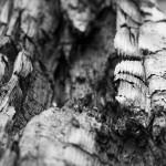 11 Fakten über Holzkohle: Von Menschheitsgeschichte und Chemie beim Holz