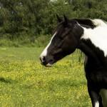 Pellets aus Pferdeäpfeln – Sinnvoll oder doch wieder nur Mist?
