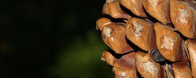 Tannenzapfen-als-Kamin-Deko