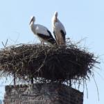 Ein Vogel im Schornstein: Was kann ich tun?