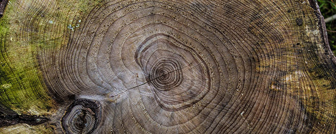 feuchtes-Brennholz