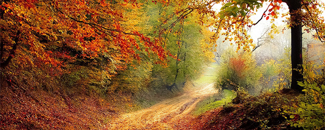 Brennholz-sammeln-im-Wald