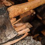 Brennholz selber schlagen: Das ist der beste Zeitpunkt