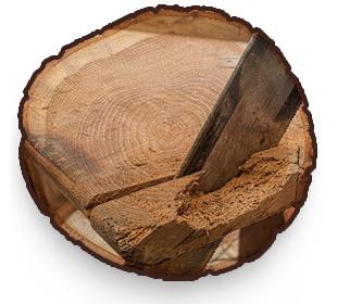 Holzwurmschäden