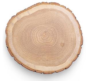 Baumscheibe Querschnitt