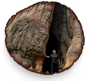 Frau unter Mammutbaum