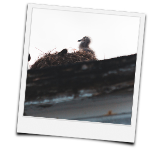 Kücken im Nest auf dem Dach
