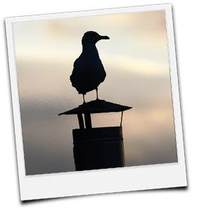 Vogel auf Rauchabzug