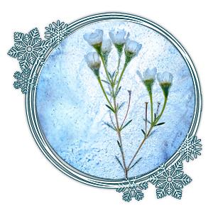 Blume eingefroren im Eis