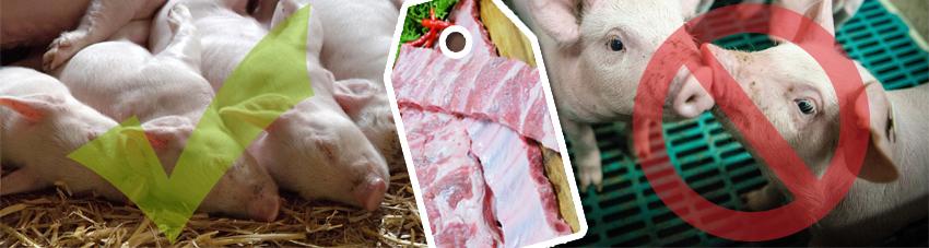 Alternative Tierhaltung bei Schweinen Strohboden vs. Spaltboden