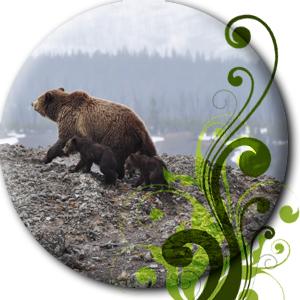 Bären in der Wildnis