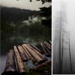 Brennholz Feuchtigkeit: Warum nasses Holz im Ofen so gefährlich ist