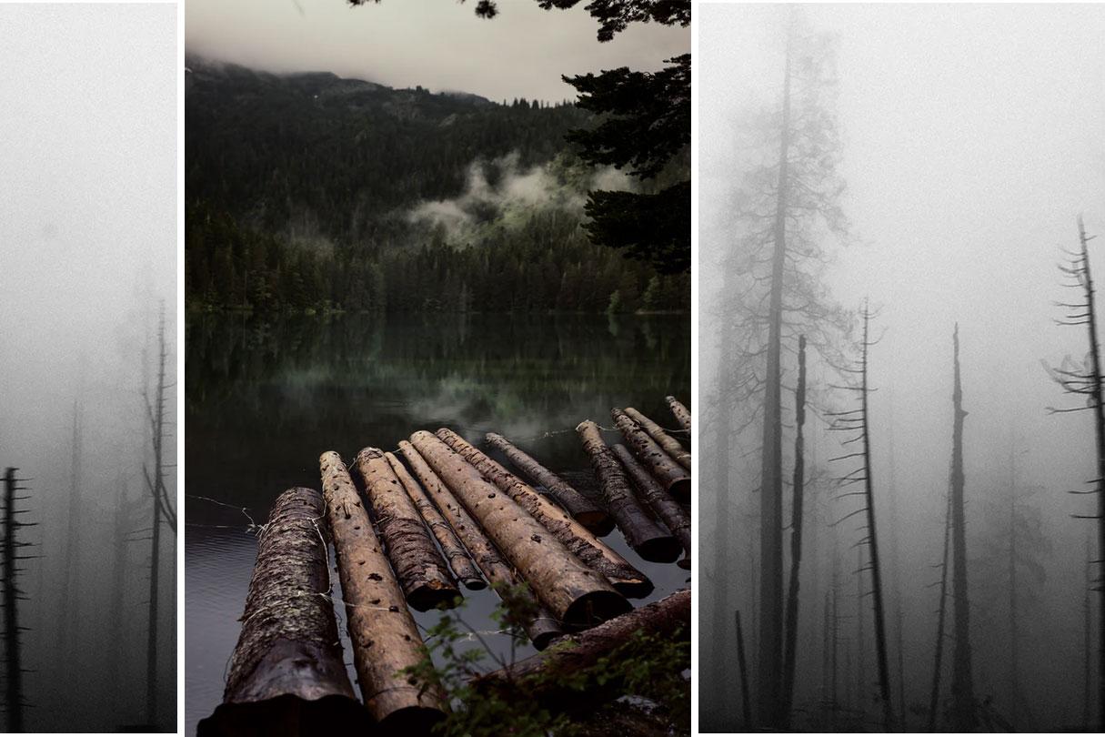 abgebrannter Wald im Nebel und Baumstämme im Fluss