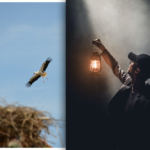 Gefahr auf dem Schornstein: Nistende Vögel