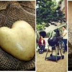 Grillkartoffeln: Ungeahnte Vielfalt für Abwechslung vom Grill