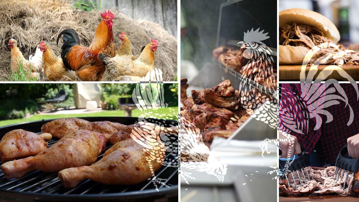 Titelbild_Pulled-Chicken_So-bereitest-du-das-gezupfte-Huehnchen-perfekt-auf-dem-Kugelgrill-zu