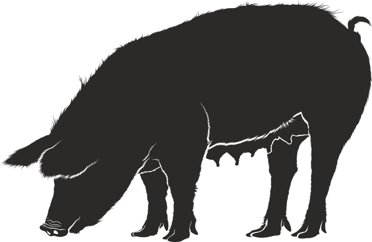 Icon eines Schweines in anthrazit