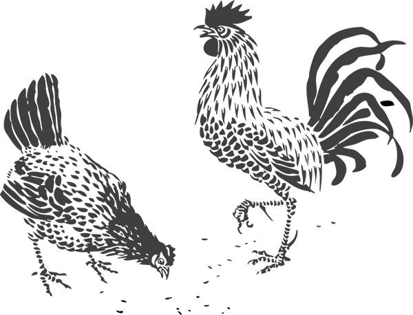 illustrierte Hühner