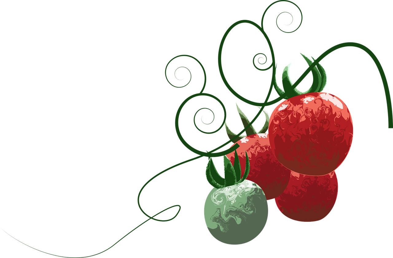 illustrierte Tomaten