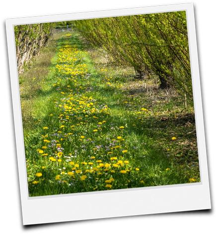 KUP mit Weiden im Frühling