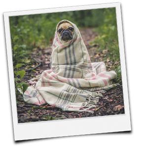 Hund in Decke gewickelt