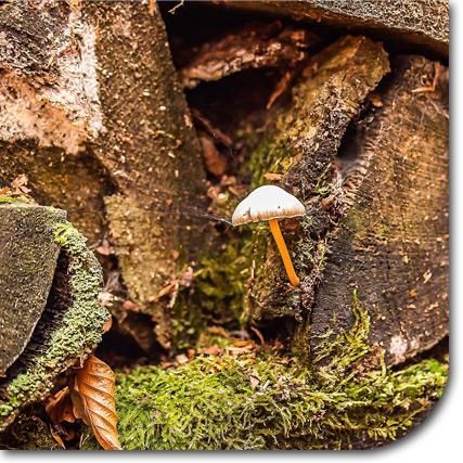 Bild von einem Holzstapel mit Moos und Pilz