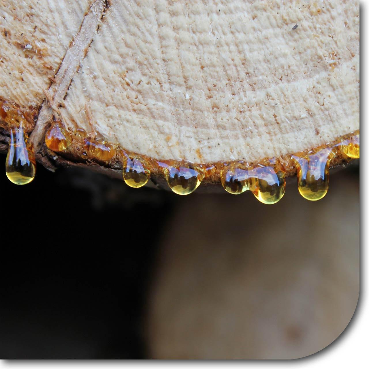 Bild mit tropfenden Harz aus einem Holzscheit